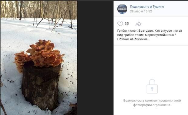 В Братцеве обнаружили грибы, похожие на зимние опята