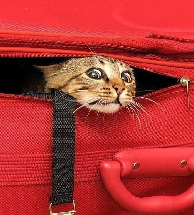 Куда отдать кота или собаку на время отсутствия? Платная передержка: факты, которые должен знать каждый!