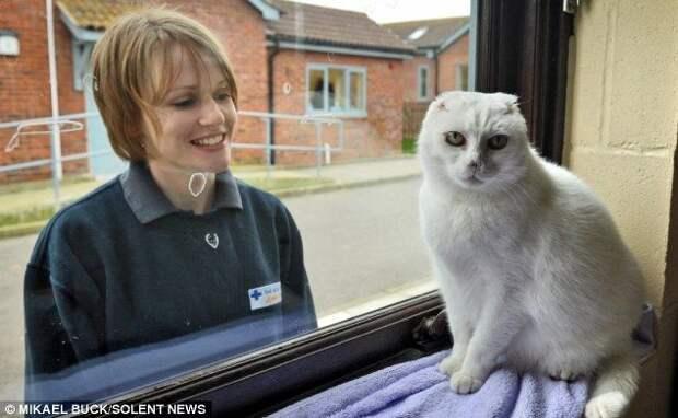 Бездомного кота не хотят брать из приюта из-за колоссального сходства с Волан-де-Мортом