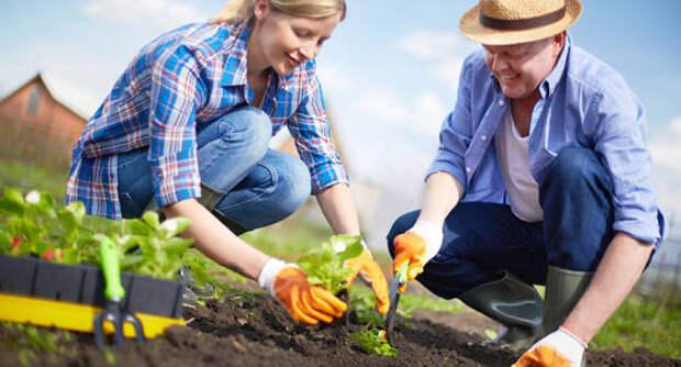Время сажать арахис: дачи превращаются в место силы и садовых экспериментов