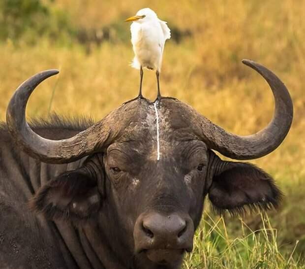 Несколько забавных проколов, которые когда-либо допускали животные