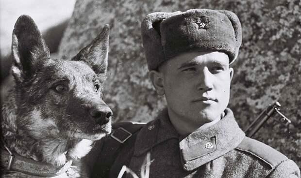Дина - первая собака диверсант