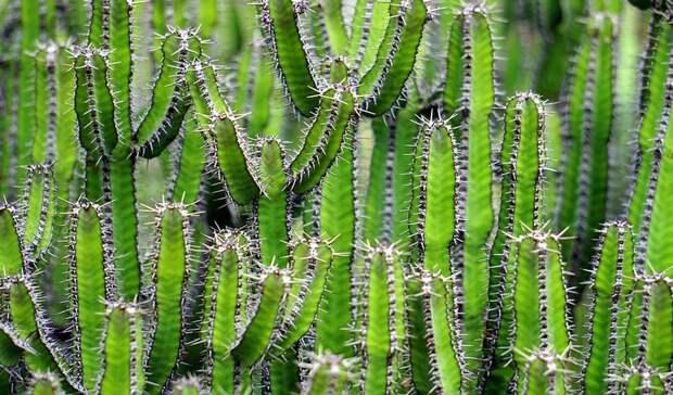 Стало известно, для кого вход вботанический сад ЮФУ останется бесплатным