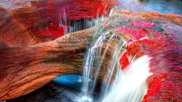 Каньо-Кристалес — самая красивая река наЗемле
