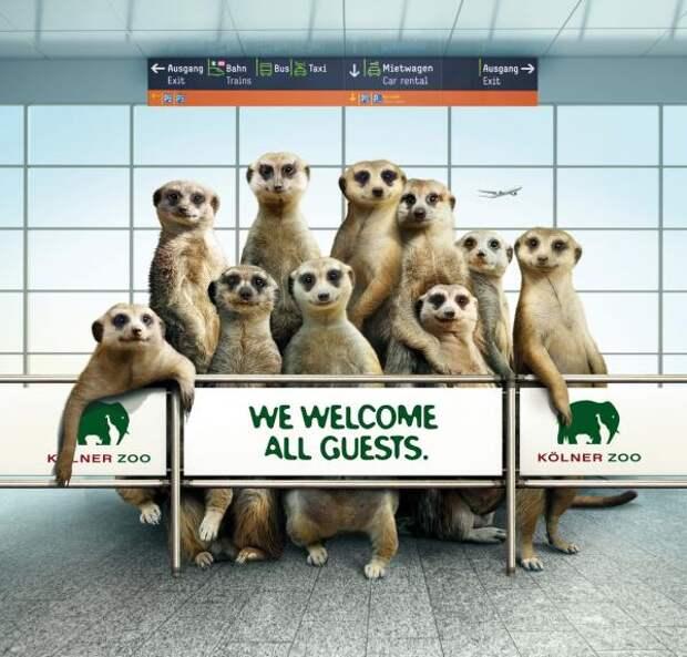 Maarket, Zoo Cologne, Preuss und Preuss, Berlin, Печатная реклама
