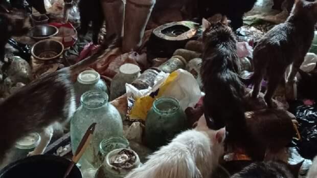 80-летняя женщина с 30 голодными котами найдена в квартире в Нижнем Тагиле
