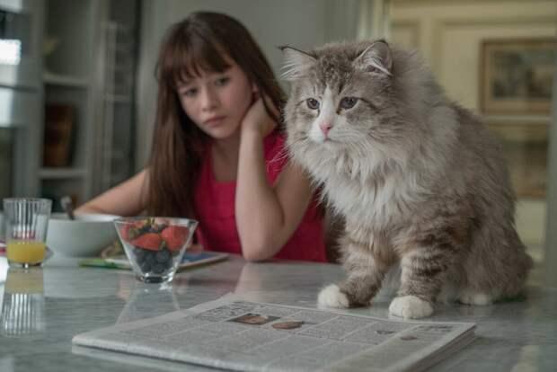 Что посмотреть? Топ-3 фильма про котиков