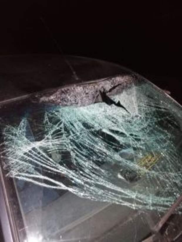 Под колесами иномарки погиб лось на Серовском тракте под Верх-Нейвинском