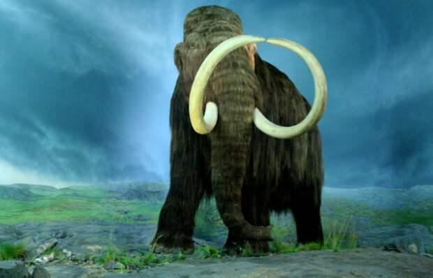 Учёные рассказали о причине исчезновения мамонтов в Северной Америке