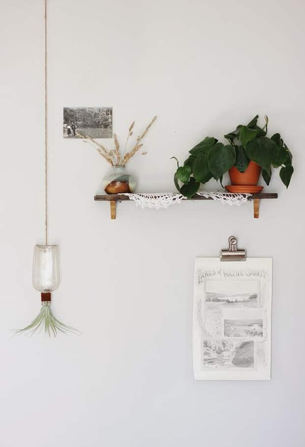 Воздушные растения в интерьере