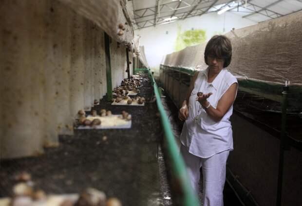 Мариела Рей демонстрирует садовую улитку (Helix Aspersa).