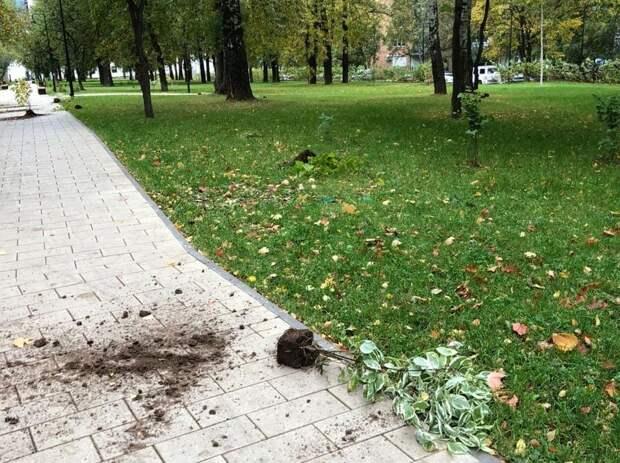 Полиция начала проверку по факту погрома на Центральной площади Ижевска