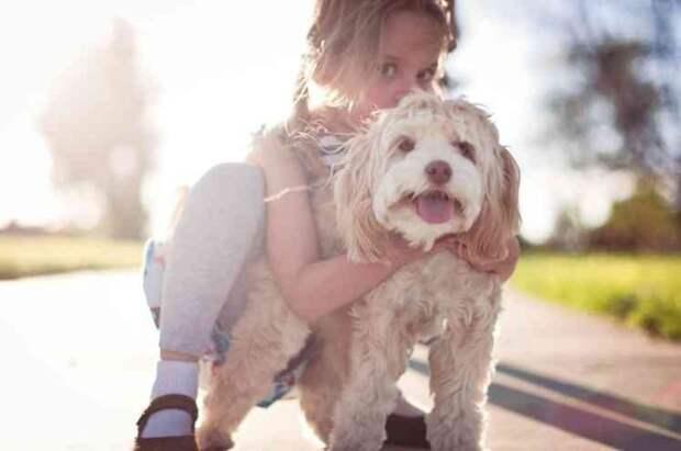 10 причин почему кокапу (кокер-пудель) является лучше породой собак в мире