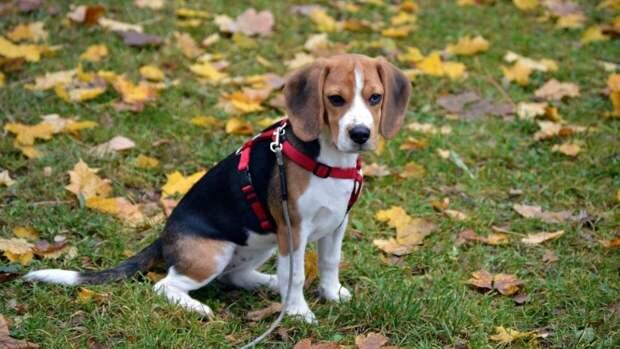 Ветеринары составили рейтинг пород собак с самым крепким здоровьем