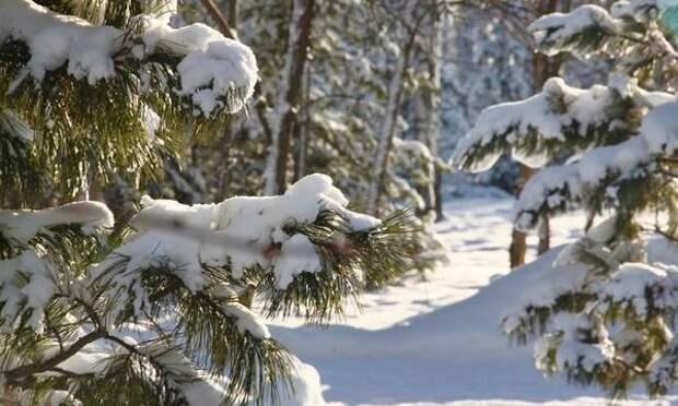 Томичей предупреждают о похолодании 7 и 8 января