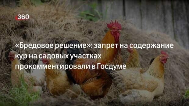 «Бредовое решение»: запрет на содержание кур на садовых участках прокомментировали в Госдуме