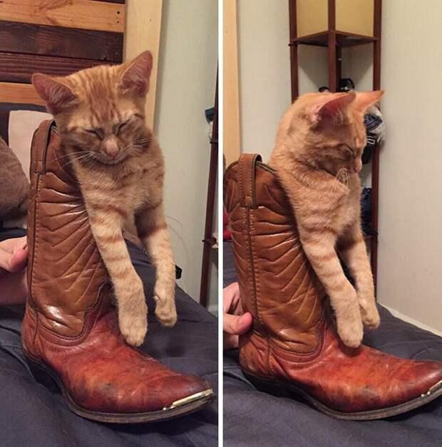 8. Коты могут спать где угодно животные, забавно, забавные животные, кот, коты, кошки, приколы с животными, смешно