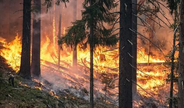 ВРоссии засутки ликвидировали более 100 лесных пожаров