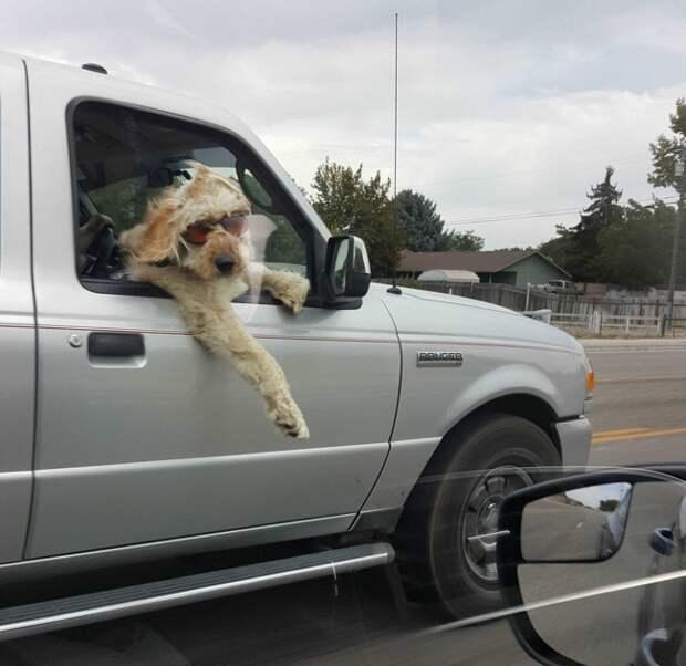 Несколько забавных собак, которые зарядят хорошим настроением на весь день