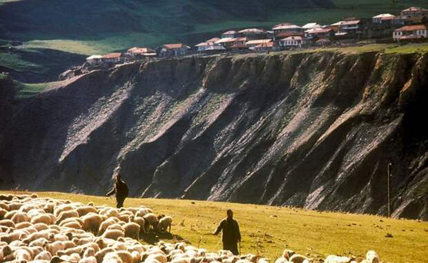 На фото: выпас скота (на снимке) на ближних пастбищах Сванетии