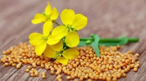 Что посадить на грядку после снятия урожая лука и чеснока
