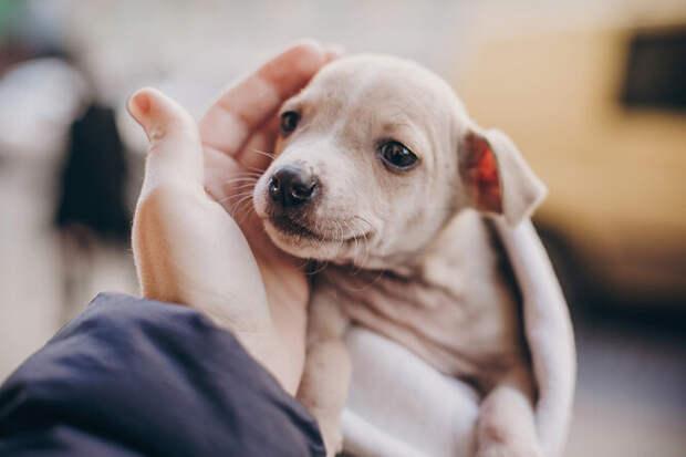 Сердце разрывается: щенок прижался к фигуре собаки, решив, что это его мать