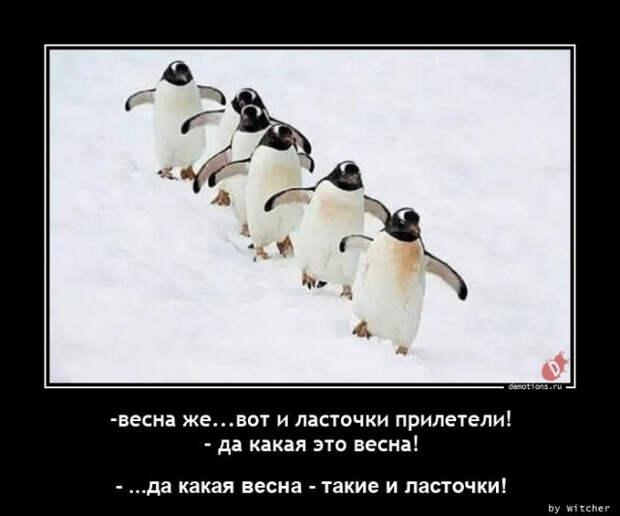 5402287_1615196700_demy3 (640x533, 54Kb)