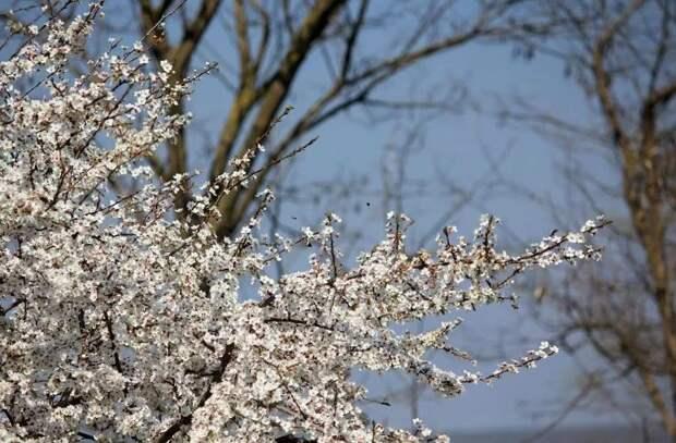 Прогноз погоды на 21 апреля: Солнце вернулось