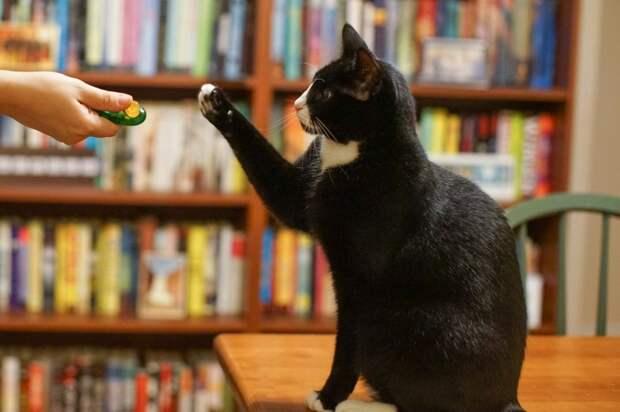 Коты понимают воспитание только через пряник. /Фото: vk.com.