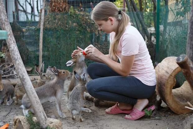 Зооволонтёры спасают ушастых в Серебряном Бору