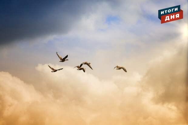 Итоги дня: возвращение перелетных птиц и холодная неделя в Удмуртии