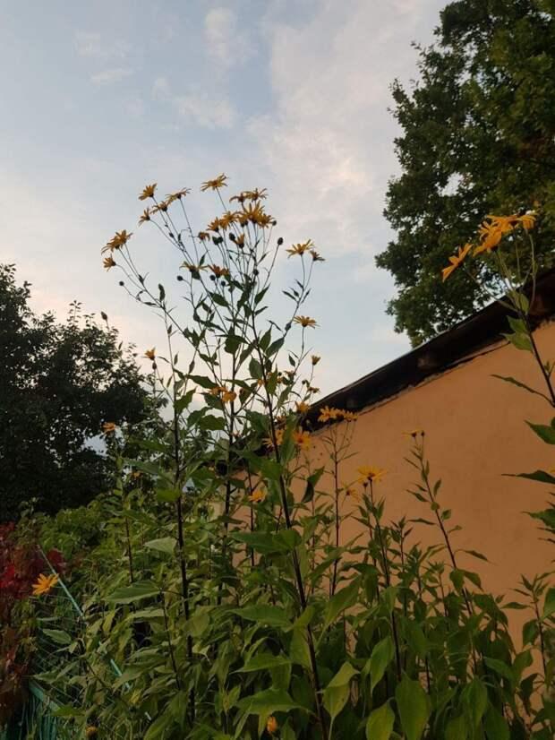 Фотокадр: осенние цветы в Северном