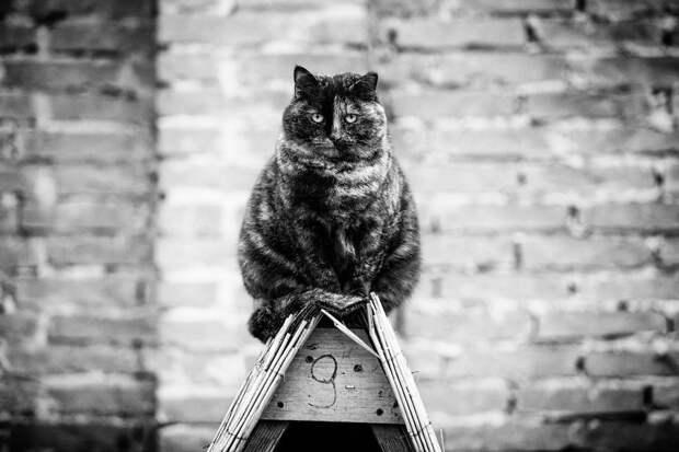 monorail_cats_photos_sabrina_boem_09.jpg
