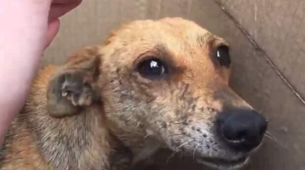 Заглянув в коробку, люди увидели испуганную собаку и больных щенков