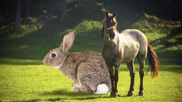 Почему кролики не растут до размера лошадей: японские ученые нашли объяснение