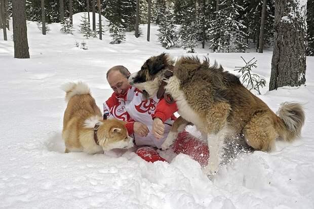 В апреле 2013 года Владимир Путин совершил зимнюю прогулку со своими собаками