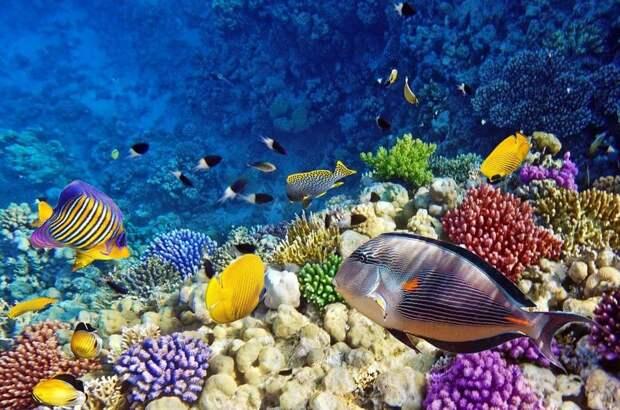 Ученые разгадали тайну специфичной окраски рифовых рыб