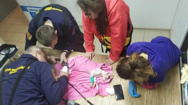 Спасатели помогли застрявшему в трубе в ванной лысому коту в Москве