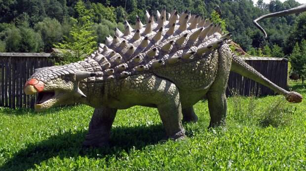Окаменелости редчайшего анкилозавра найдены в Марокко