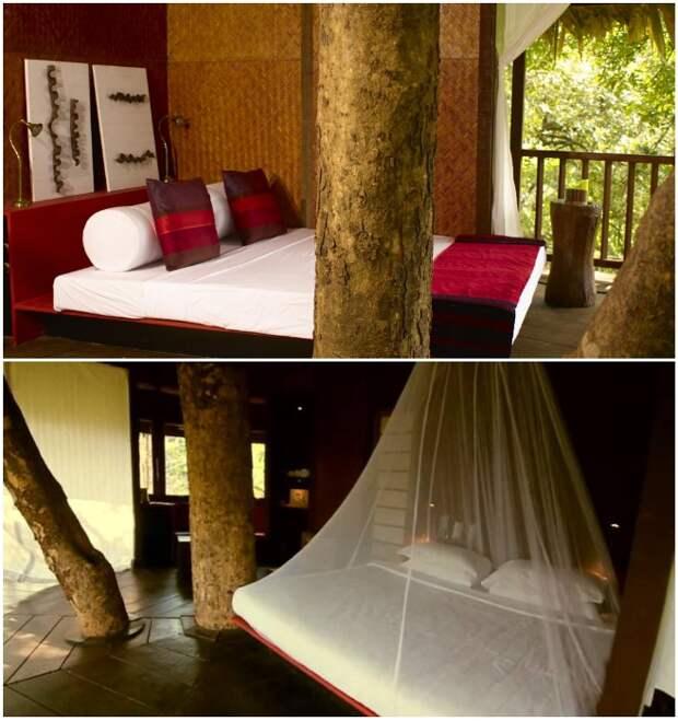 Романтический номер на дереве – идеальное место для любителей уединенного отдыха на природе (Rainforest, Индия).   Фото: rainforest-boutique-resort.kerala-hotels.