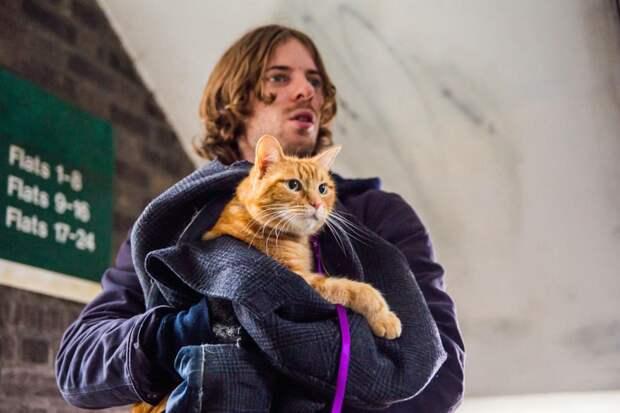 боб уличный кот по кличке боб сериал