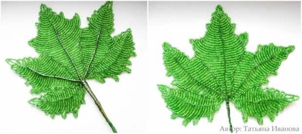зеленый лист винограда