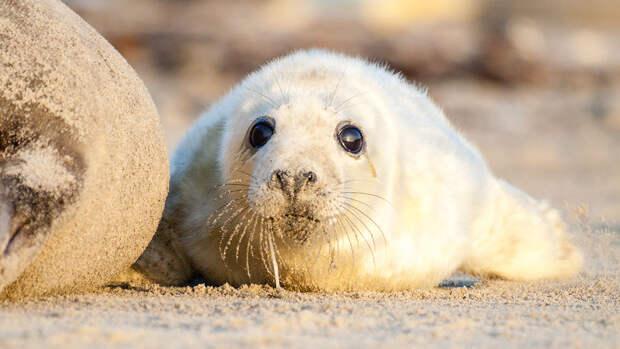 На побережье Каспийского моря найдены более 150 погибших редких тюленей