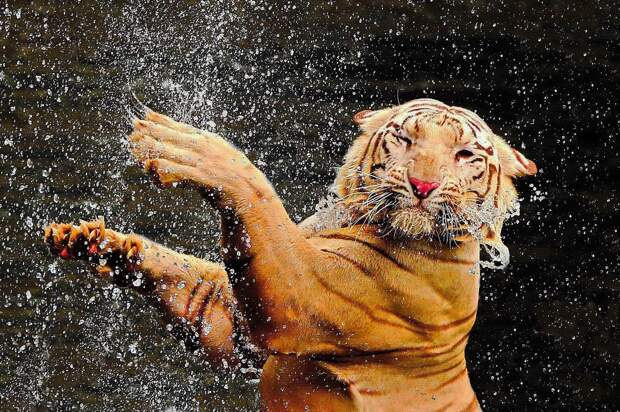 zhivotzaiyun 13 Лучшие фотографии животных со всего мира за неделю