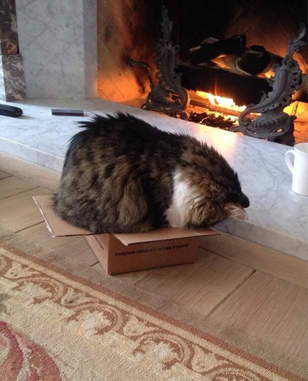 32. Для котов не существует слишком маленьких коробок животные, забавно, забавные животные, кот, коты, кошки, приколы с животными, смешно