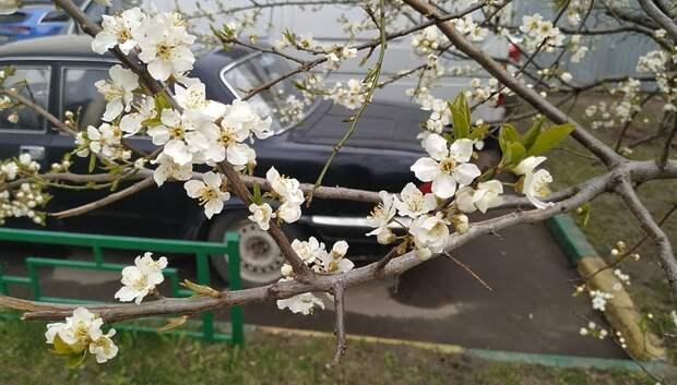 В начале мая в Московском регионе начнет теплеть