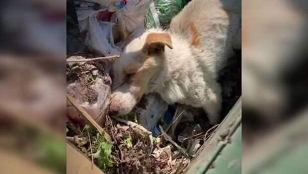 Глава хутора выбросил умирающего пса в мусорный бак ВИДЕО