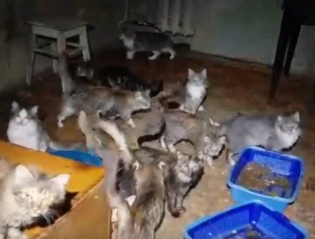 Полиция в Ижевске вновь начала проверку квартиры, в которой живут полсотни кошек