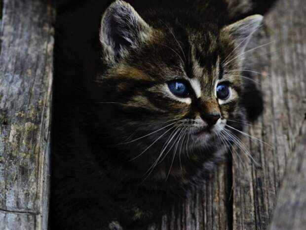 В Петербурге для спасения котенка пригнали автоподъемник