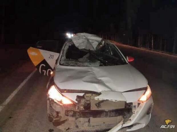 Беременную лосиху сбил насмерть таксист в пригороде Новосибирска